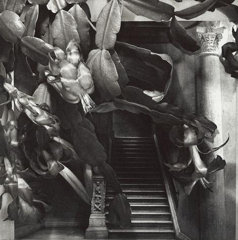 Marlene MacCallum's photogravure