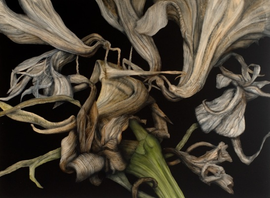 Decaying Amaryllis, 2012. Oil on paper. 75cm x 102cm.