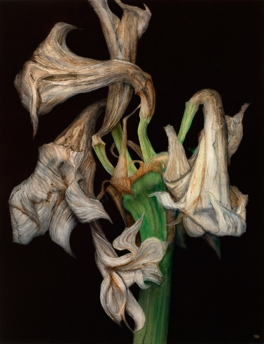 Decaying Amaryllis III, 2012. Oil on paper. 58cm x 45cm.
