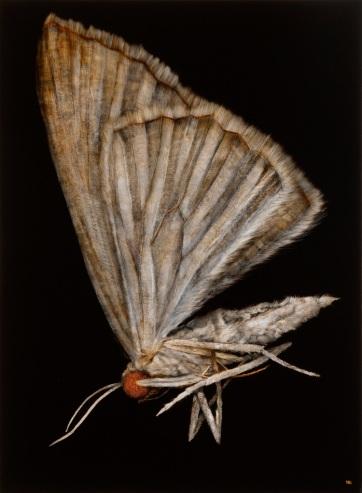 Moth No.3, 2013. Oil on paper. 89cm x 71cm.