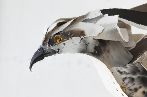 Osprey 2015