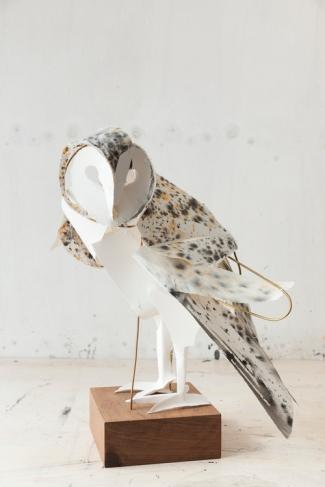 Barn Owl 2015