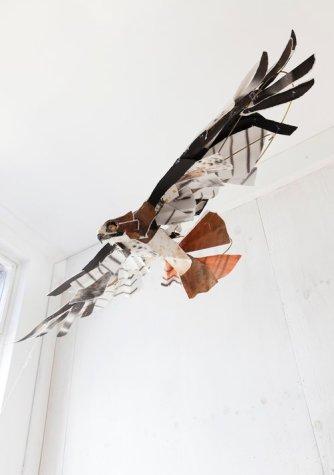 Hawks 2016
