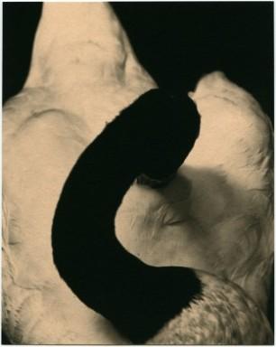 albarran-cabrera-15-getscaledpicture