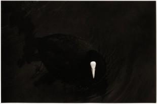 albarran-cabrera-16-getscaledpicture