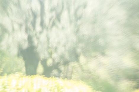 Renoir's Garden #5, 2013
