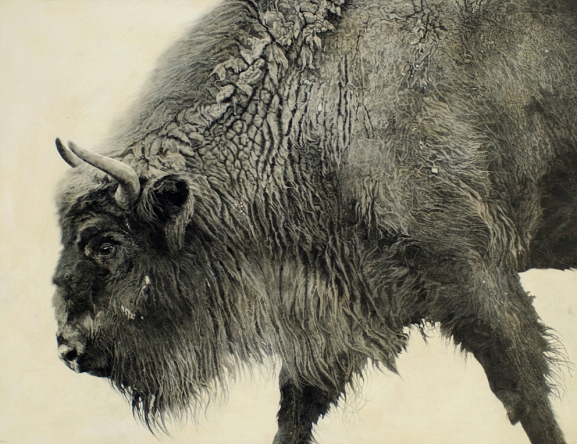 European Bison I / Bison bonasus / 2010 / 93 x 122 cm / Pencil on panel