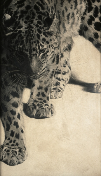 Amur Leopard I / Panthera pardus orientalis / 2010 / 122 x 70 cm / Pencil on panel