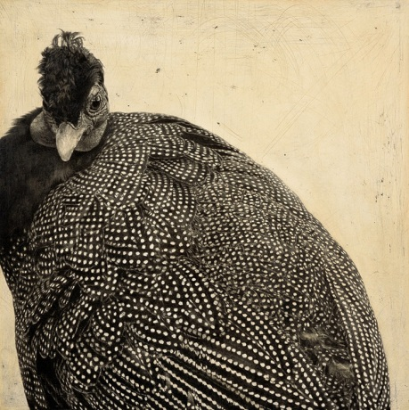 Crested Guineafowl I / Guttera pucherani / 30 x 30 cm / Pencil on panel