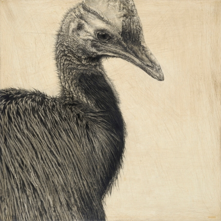 Southern Cassowary I / Casuarius casuarius / 30 x 30 cm / Pencil on panel