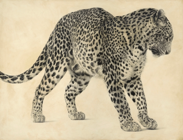 Sri Lankan Leopard I / Panthera pardus kotiya / 94 x 122 cm / Pencil on panel