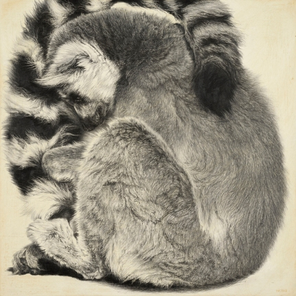 Ring-tailed Lemur III / Lemur catta / 30 x 30 cm / Pencil on panel