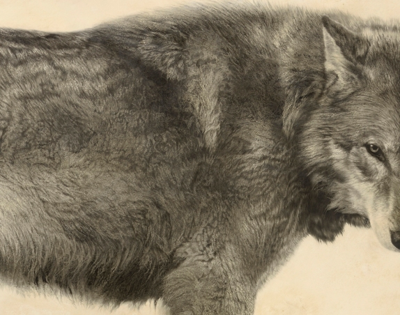 Grey Wolf II (Detail)