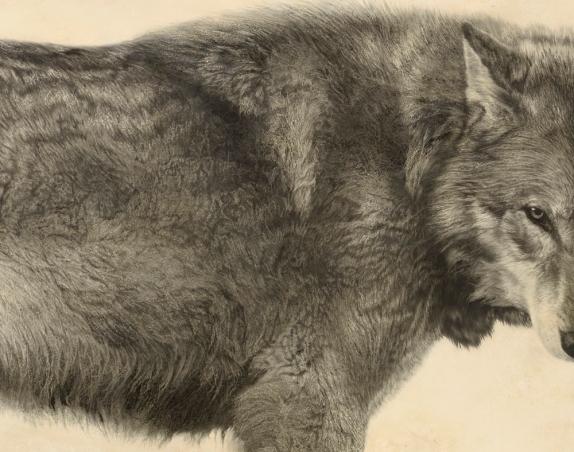 Grey Wolf II (Detail)