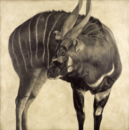 Bongo I / Tragelaphus eurycerus / 2008 / 100 x 100 cm / Pencil on panel